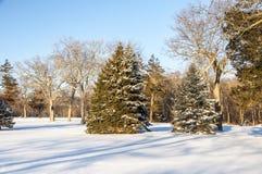 Snowy-Szene  lizenzfreies stockbild