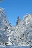 Snowy-Szene Stockbilder