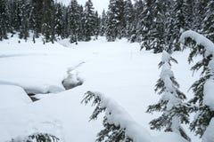 Snowy-Szene von den Berg Seymour-Schneeschuhspuren stockfotografie