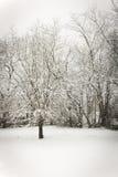 Snowy-Tag Lizenzfreies Stockfoto
