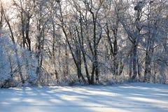 Snowy-Tag von Januar Stockfotos