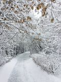 Snowy-Tag von Januar Absolut weiß Lizenzfreie Stockbilder