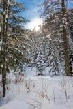 Snowy-Tal Lizenzfreies Stockfoto