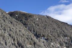 Snowy-Tannenbäume auf einem Berg Stockbild