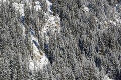 Snowy-Tannenbäume auf einem Berg Stockfoto
