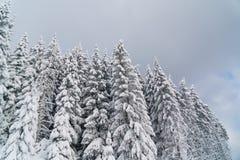 Snowy-Tannenbäume und bewölkter Himmel in den Bergen Lizenzfreie Stockfotografie