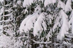 Snowy-Tannenbaumasthintergrund Lizenzfreie Stockbilder