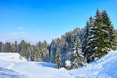 Snowy-Tannenwald in der alpinen Landschaft am blauen Himmel Stockfotografie