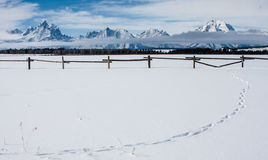 Snowy tetons western fence and pure snow with line of tracks Royalty Free Stock Image