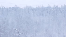 Snowy Thick Forest above Arctic Circle