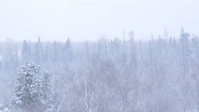 Snowy Thick Forest above Arctic Circle stock video footage