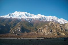 Snowy-Tibetanerberge Stockfotos