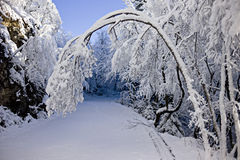 Snowy Time of Year Stock Image