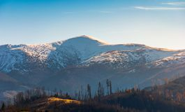 Snowy top of Velykyi Verkh. Beautiful morning scenery of late autumn in Carpathian mountains, Ukraine Royalty Free Stock Photos