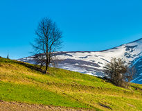 Snowy tops of carpathians in spring. Carpathian mountain peaks in snow above green rural meadow in spring season Royalty Free Stock Photo