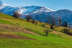 Snowy tops of carpathians in spring. Carpathian mountain peaks in snow above green rural meadow in spring season Stock Images