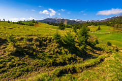 Snowy tops of carpathians in springtime Royalty Free Stock Image