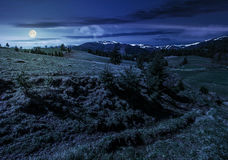 Snowy tops of carpathians in springtime at night. Carpathian mountain ridge with snowy peaks. Grassy alpine meadow with spruce forest in spring season. Fine stock images