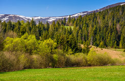 Snowy tops over the rural fields in springtime. Carpathian mountain peaks in snow. green rural meadow near the spruce forest in springtime Stock Photography