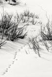 Snowy track in Grand Teton National Park Royalty Free Stock Photography