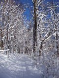 Snowy Trail. Snowy ski, snowmobile, and walking trail through a winter forest of snow-covered trees Stock Photography