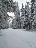 Snowy trail. A beautiful walk in the forest Royalty Free Stock Photography