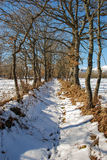 Snowy trail. In Campoo valley, Cantabria. Spain Stock Photo