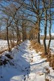 Snowy trail Stock Photo