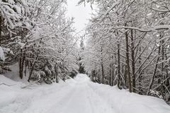 Snowy trail through corridor of deciduous trees, Whistler, BC Royalty Free Stock Photo