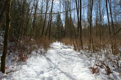 A snowy trail through the forest Royalty Free Stock Photos