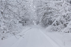Snowy trail. Snow covered trees with a snowy trail Stock Image