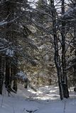 Snowy Trail Royalty Free Stock Photography