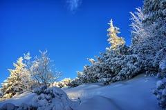 Snowy trail Royalty Free Stock Photos