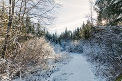 Snowy trail in winter with sun shining through royalty free stock photography