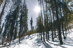 Snowy Trail in the Woods of Colorado stock image