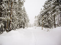 Snowy trails in Yellowstone Park Stock Photo