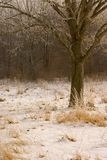 Snowy Tree. In winter royalty free stock image