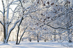 Snowy tree Royalty Free Stock Photos
