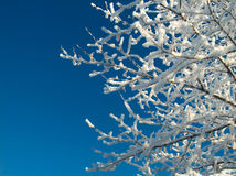 Snowy tree. On a bright day Stock Photography