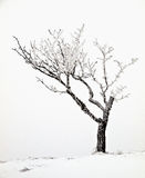 Snowy tree. In winter landscape Royalty Free Stock Photos