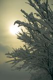 Snowy tree. With beautiful sky Royalty Free Stock Image