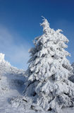 Snowy tree. Tree on Jested hill in winter Royalty Free Stock Photos