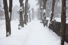 Snowy tree alley Stock Photo