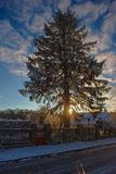 Snowy tree in backlight at sunrise Stock Images