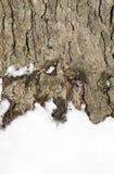 Snowy tree bark Stock Photography