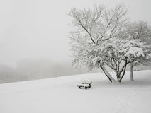Snowy tree. And a bench Royalty Free Stock Photography