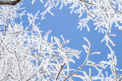 Snowy tree branches against blue sky Royalty Free Stock Photos