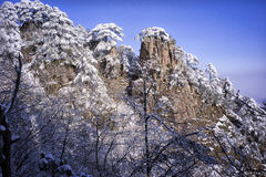 Snowy tree branches mountain huangshan. Snowy tree branches under blue sky Stock Photos