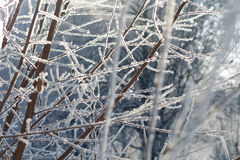 Snowy tree branches Stock Photo