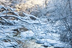 Snowy tree branches Royalty Free Stock Images